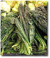 Cavolo Nero/Black Leaf Kale: a cup has more than 50% of daily allowances of vitamins K, A and C, with significant amounts of manganese, copper, fiber, calcium, iron, the B vitamins, vitamin E, and many other elements. Rich in antioxidants, thought to help prevent conditions ranging from stomach, colon and bladder cancer to ulcerative colitis. Filling and low in calories, 19-26 per 100 grams (or quarter lb), which leads Italian doctors to recommend it to those who want to lose weight.