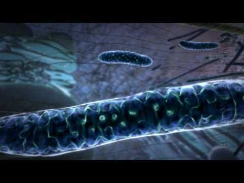 Mitochondria Beautiful Animation