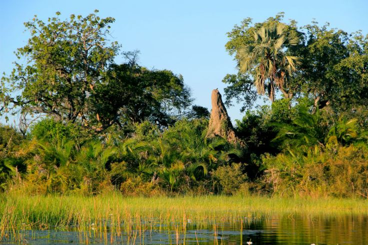 Travel to the heart of the Okavango Delta in Botswana, for a truly unique experience! http://www.wunderbird.com/safari/safari_rejser_i_de_afrikanske_deltaer