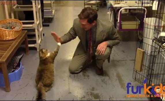 Abrigo de animais faz comercial genial para incentivar adoção de gatinhos