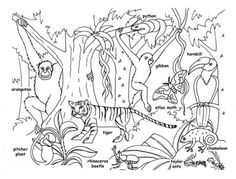 Rainforest Animals for Kids | Printable Rainforest Animal Coloring Pages