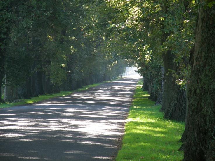 Oak Avenue- I use to ride my bike down this road. So pretty