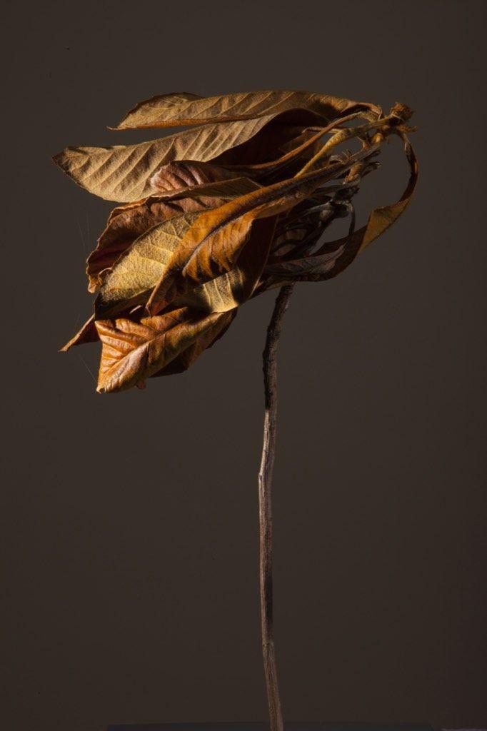 Yelena Zhavoronkova : The Burn Series - L'Œil de la photographie