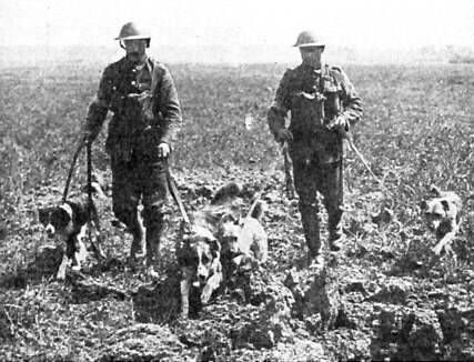 US Army, WWI, War Dogs, France