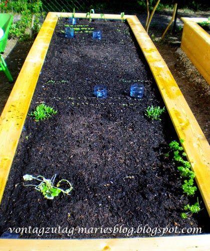 Hochbeet. Erste Bepflanzung im März.  @vontagzutagmari http://vontagzutag-mariesblog.blogspot.com