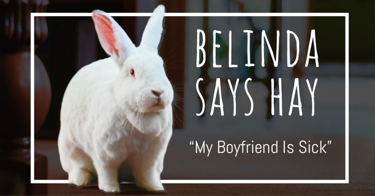 Belinda wanted to announce some products and special events … but that will have to wait.  It's hard to focus on work when you're helping a special friend after surgery.   Read the story => https://smallpetselect.com/uncategorized/belinda-says-hay-my-boyfriend-is-sick  #Belinda #spokes rabbit  #boyfriend #bunniesofinstagram #rabbitsofinstagram
