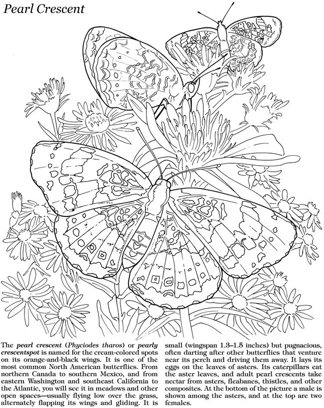 detailed butterfly coloring pages heart flower butterfly