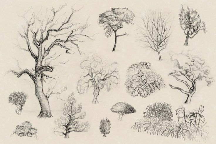 drawing plants and trees - Google Search