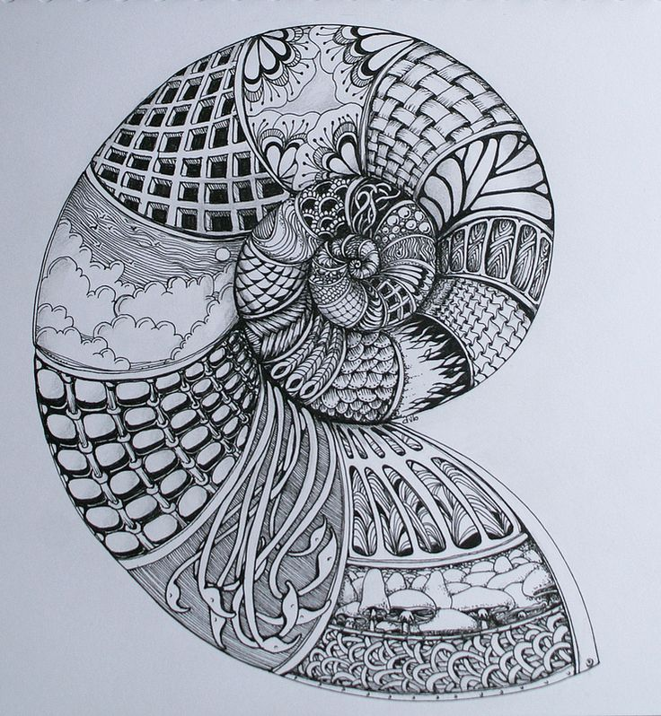 spiral shell by Deborah @ flickr - I love this!