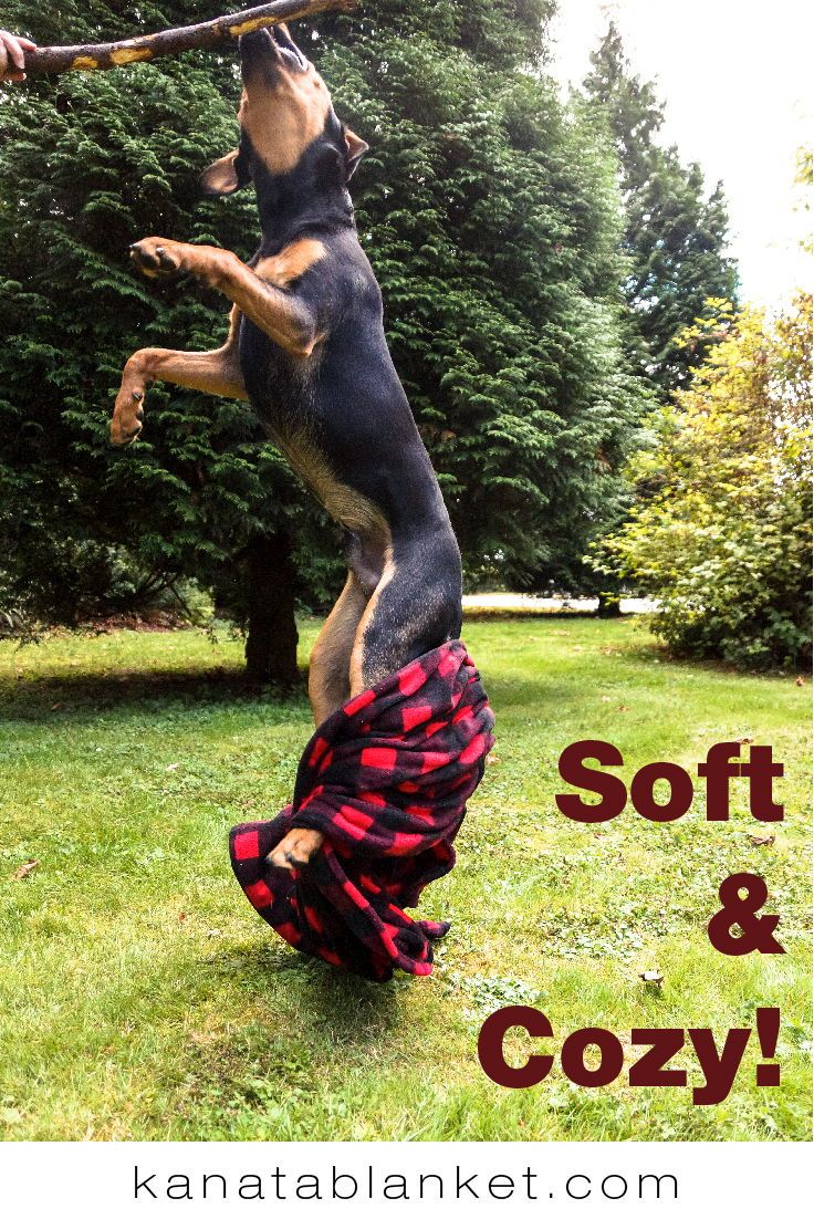 Kanata blankets are loved by dogs and humans alike! For more, follow us @kanatablanket
