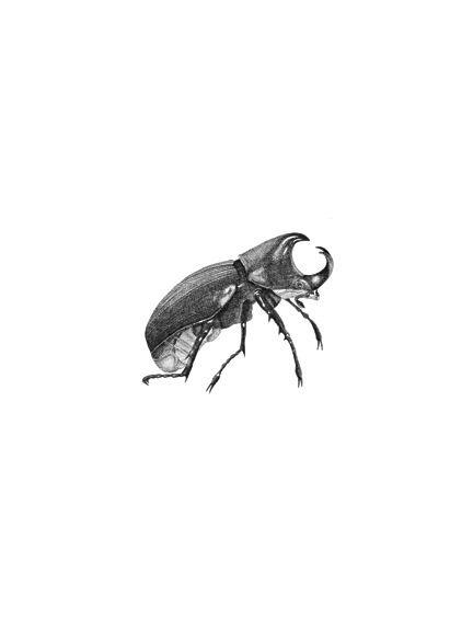 Hand drawn Botanical Rhinoceros Beetle