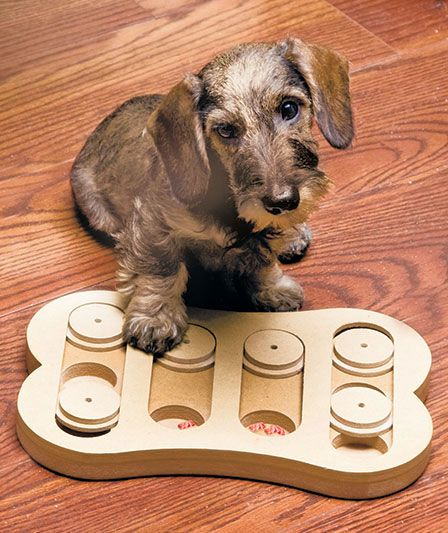 Fun Toy Dogs : Best things my dogs want images on pinterest animals