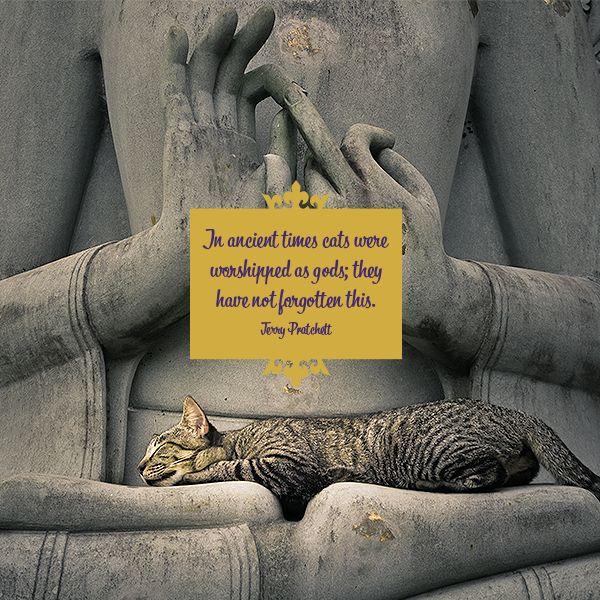 Pet Quotes - Cat