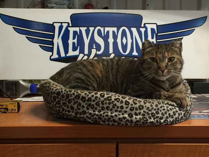 """Our shop mascot """"Razor"""". To read more about her story visit our Blog at http://keystonewestern.blogspot.ca/2015/09/razor-story-of-keystone-westerns.html  #cats #trucking #mascot #transportation"""