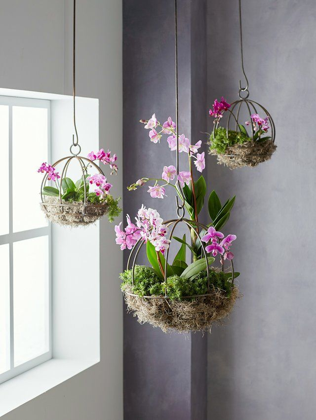 17 Hanging Plants That Are Perfect Additions to Your Home ...