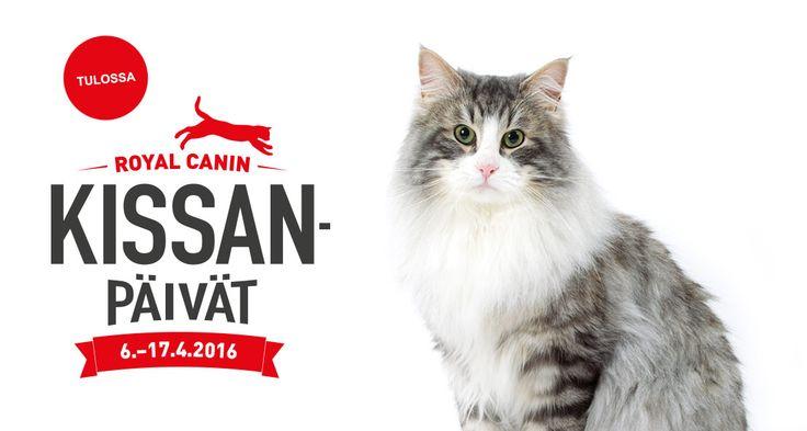 Me Royal Caninilla vietämme tänä vuonna Kissanvuotta ja tarjoamme asiantuntevaa tietoa hyvästä ja vastuullisesta kissan hoidosta. Nyt on aika antaa arvo jokaiselle kissalle. http://www.kissanvuosi.fi/