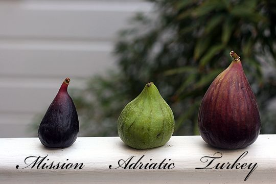 """Since eating a fresh fig from the trees of Thomas Jefferson's Monticello, I am quite fond of figs!"" -Katie Hyllested"