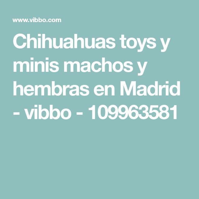 Chihuahuas toys y minis machos y hembras en Madrid - vibbo - 109963581