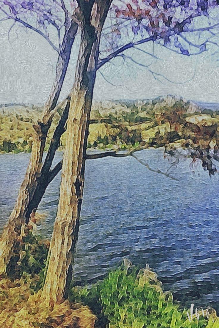 Skaha Pines (Photo Art)