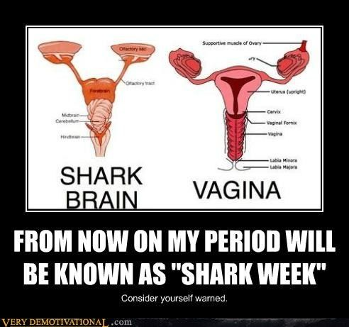 """HA! *Although, I have to note that this diagram bothers me, We have a Shark Brain aside what should be labeled either """"Uterus"""" or """"Female Reproductive System."""" My desire for accuracy causes me to say, """"This is hilarious, but do better."""""""