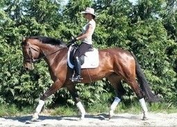 Dressage Horses for Sale, Equestrian Horses, Warmbloods for Sale Holland