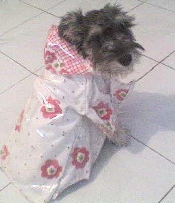 Patrón de bata impermeable de lluvia para perro   Patrones de ropa para perros