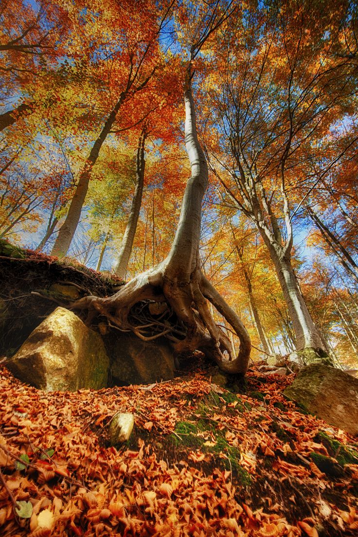 "Autumn - If you want, follow me <a href=""http://www.amiciperlafotografia.com/"">✔ Blog </a>--<a href=""https://www.facebook.com/giovanniv0lpe""> </a><a href=""http://giovannivolpe.myportfolio.com/"">✔ Sito web </a>--<a href=""https://www.facebook.com/giovanniv0lpe""> ✔ Facebook </a>--<a href=""https://www.facebook.com/groups/nikon.fotografia"">  ✔ Group facebook</a>"