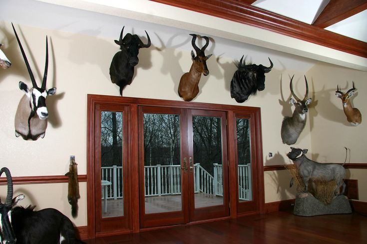 The 25 best ideas about trophy rooms on pinterest room for Trophy room design
