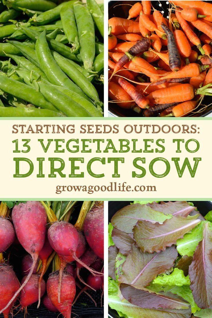 Starting Seeds Outdoors 1000 Starting Seeds Outdoors Winter Vegetables Gardening Planting Vegetables