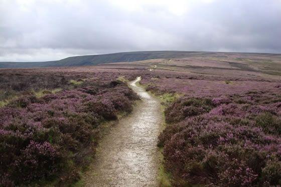 Yorkshire Moors (Chris Pape)