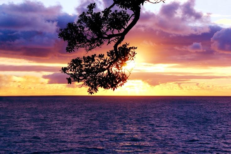 Sunrise through Pohutakawa Tree  - Hahei, New Zealand Beach, Summer, Ben Amies © 2012