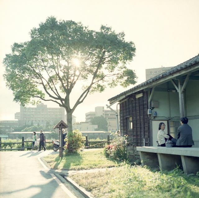 Tree. Taipei. Hasselblad 503CW