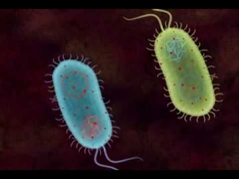 Transformation in Bacteria - YouTube (Module #2)