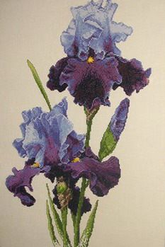 Cross stitch - flowers: Iris (free pattern with chart)