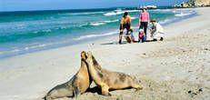 SeaLink Kangaroo Island Ferry & Accommodation - SeaLink Kangaroo Island Seal Bay