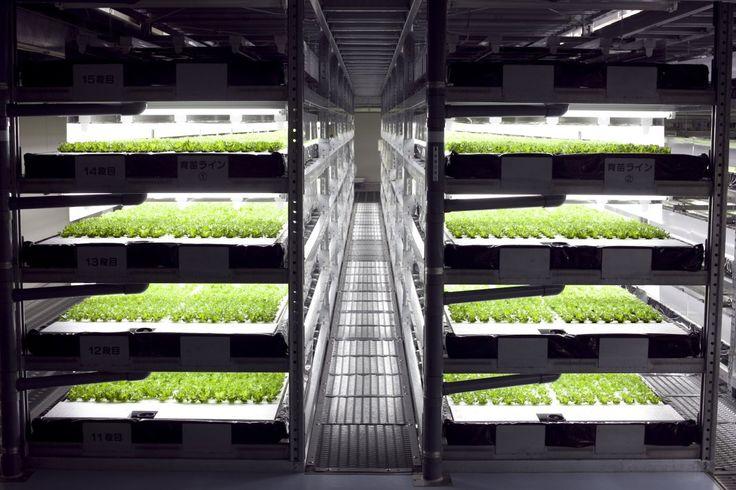 Veggie Factory – La première ferme verticale gérée par des robots