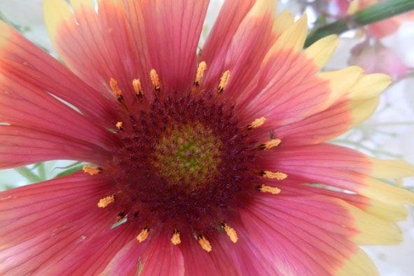 Garden flowers - Extreme closeup - 809