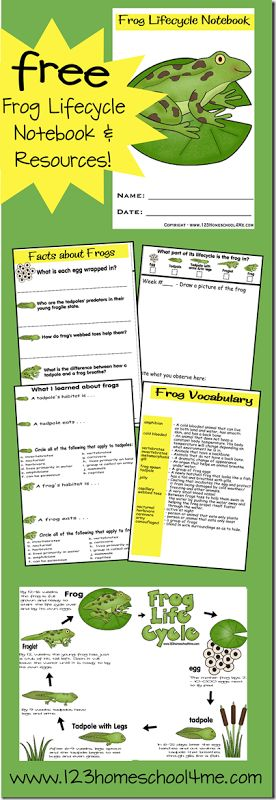 Frog Lifecycle Free Printable - In our homeschool science this year we did a frog unit. My kids and I are definitely hands on learners so we used a Frog Habitat to watch tadpoles change into frogs. It took a couple months, but it was fascinating to get to experience it ourselves. I made this {free} printable Frog Lifecycle Notebook to help the kids record their observations and to teach them too.
