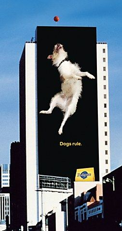 Another super creative OOH ad from Pedigree!  'Dog rules!! Simple yet effective outdoor advertising for Pedigree!'