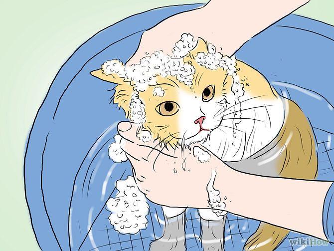 Je kat in bad doen - tips