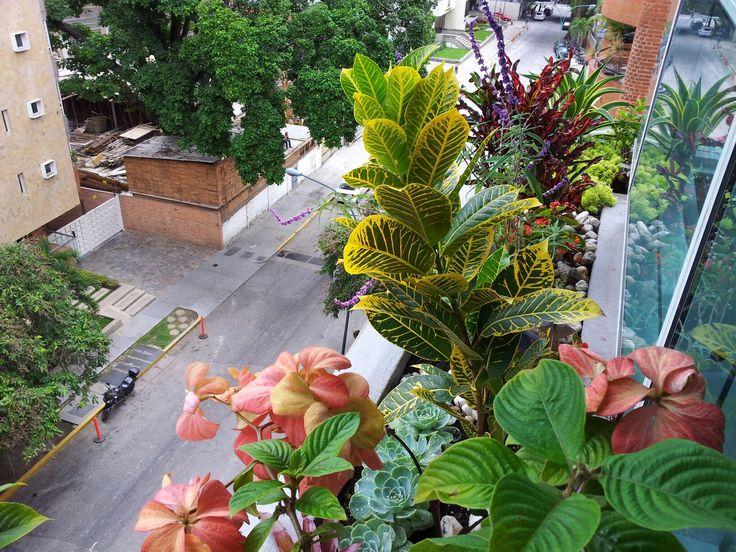 Flores plantas crotos bromelias paisajismo color for Disenos de apartamentos