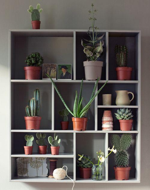 #vtwonen #letterbak #cactus #green #vtwonenshop