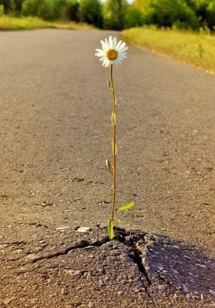 Картинки одинокий цветок в асфальте