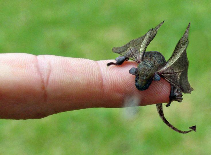 baby dragon on human finger