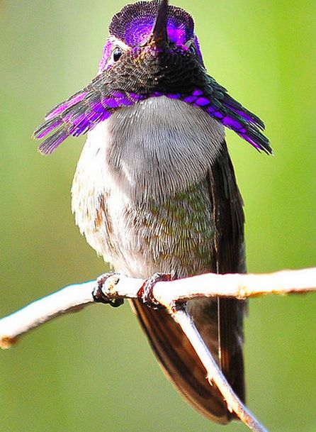 25 best ideas about The Hummingbird on Pinterest