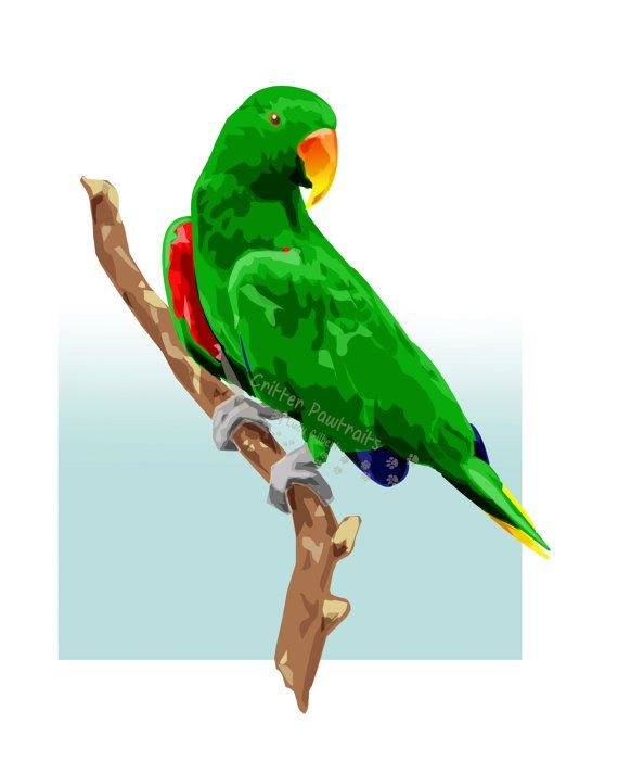 Exotic Bird Eclectus Pet Parrot Illustrated Print in Mount Various Sizes Available Critter Pawtraits