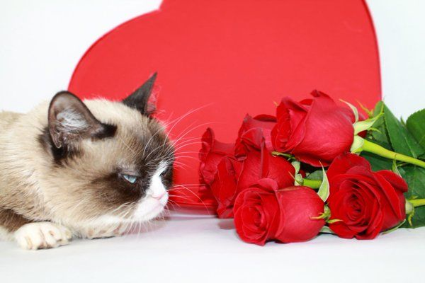 happy valentines day cats