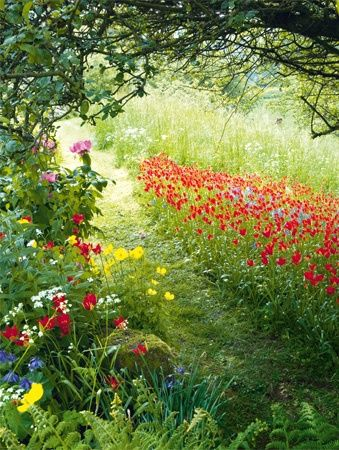 klaprozen, veldbloemen, gras