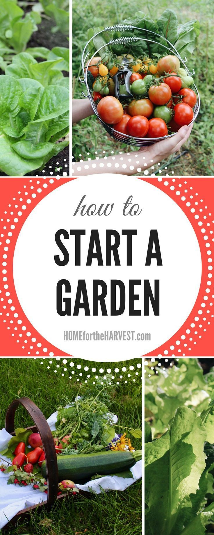 In-depth tutorial about how to start your first garden - Includes Garden Planning, Planting, Care, and Harvest  - All Organic   Home for the Harvest #howtostartagarden #startagarden #gardening #garden #organicgardening #learntogarden #howtogarden #beginnergardening #gardeningforbeginners