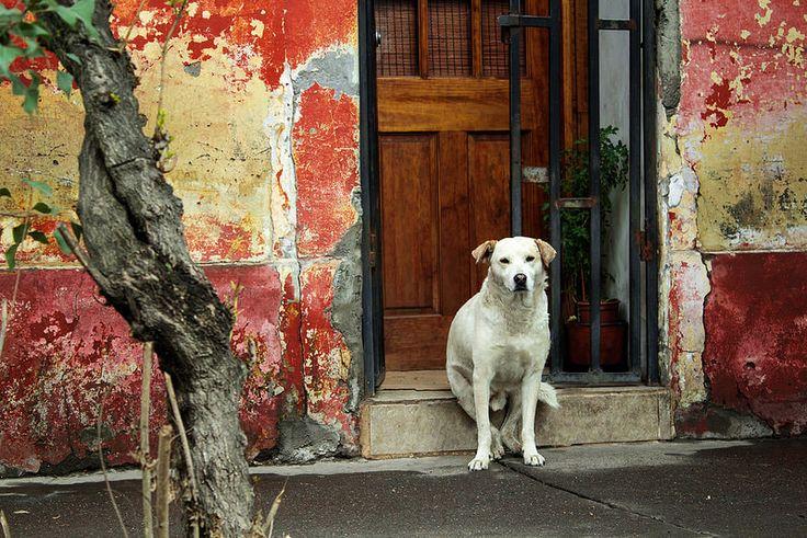 Perro Callejero | Flickr - Photo Sharing!